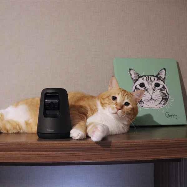 大事な家族を見守れる、ペットカメラとは?飼い主の目線でリアルレビュー